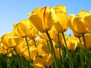 Péče o zahradu březen