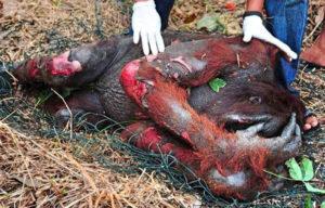Masakr kvůli palmovému oleji