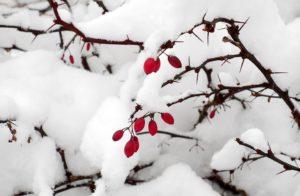 Péče o zahradu únor